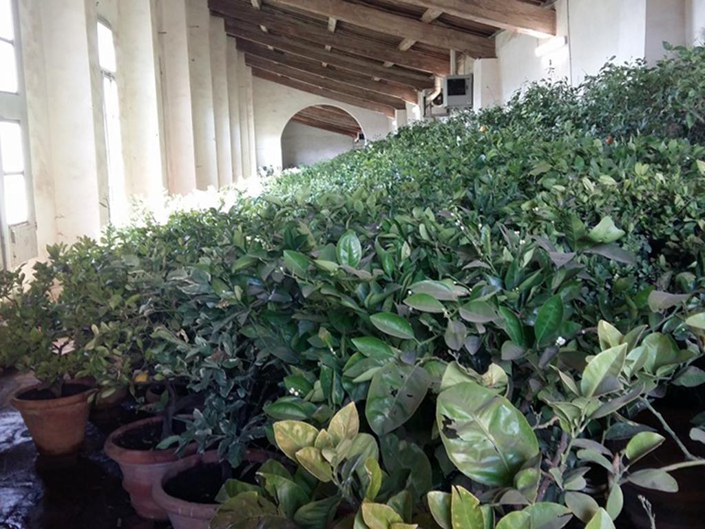 Giardino di Villa Castello