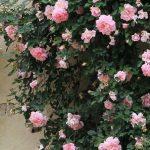 secret gardens of florence